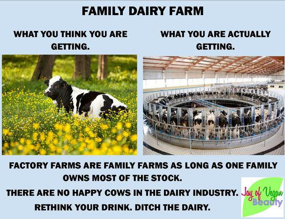 rethink your drink, ditch dairy; there are no happy cows in the dairy industry