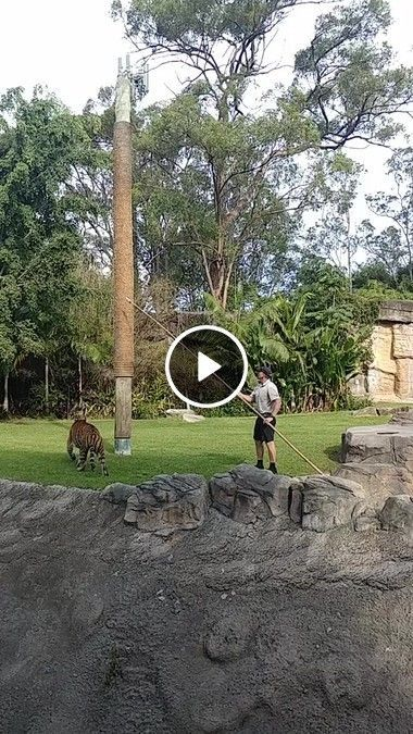 Homem e com o seu tigre no jardim