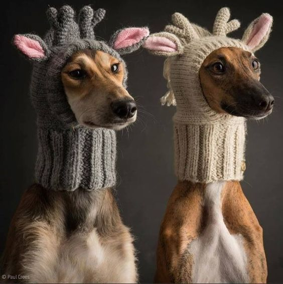"""Knitted Dog Hat With Antlers - Holy Hell¡ I'm not generally a """"dog clothes person"""", but this pattern is not only fantastic, but FREE! The problem is I can crochet crazy stuff all day & night; this pattern is knit and I suck at anything but the most basic stitches...anybody knit? I could be persuaded to pay for a great rendition of the above... If you're interested, hit me up at:  musingsnippets@gmail.com Can't wait to hear y'all out there! :)"""