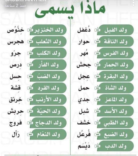 ماذا يسمى الحيوانات Learn Arabic Language Arabic Language Learning Arabic
