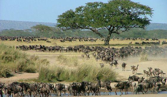 Serengeti National Park | Serengeti National Park Safari Guidebook > Northern Tanzania