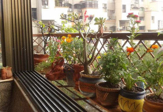 praniti verma s small garden ideas for indian apartments