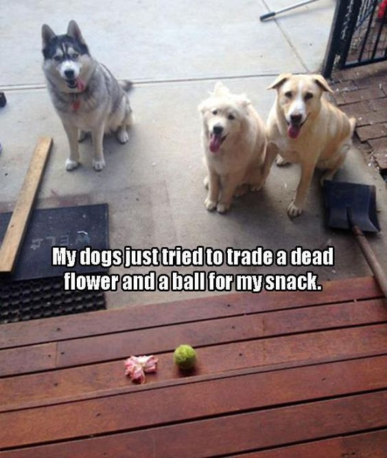 Image result for site: pinterest.com dog having fun