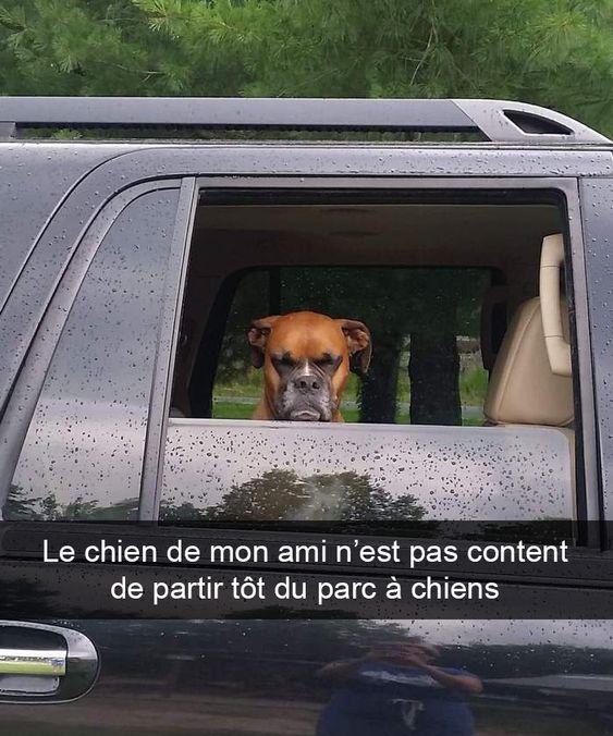 21 photos de chiens avec des sous-titres hilarants (4e partie) – ipnoze