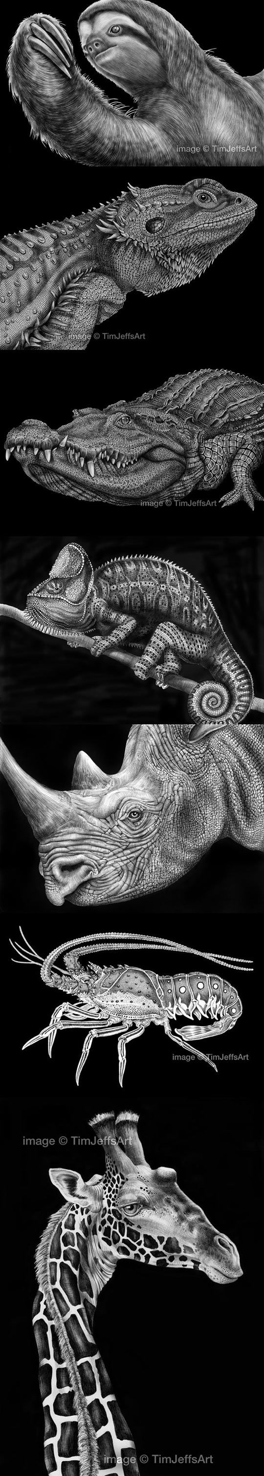 Amazingly detailed drawn animals animal drawings for Cool detailed drawings
