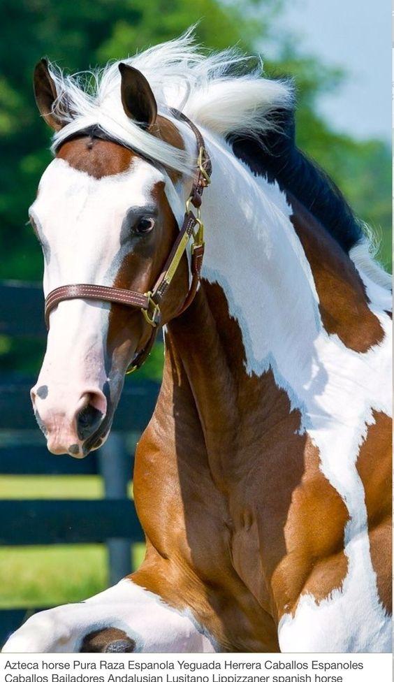 Me gustan los caballos ¡pintos!