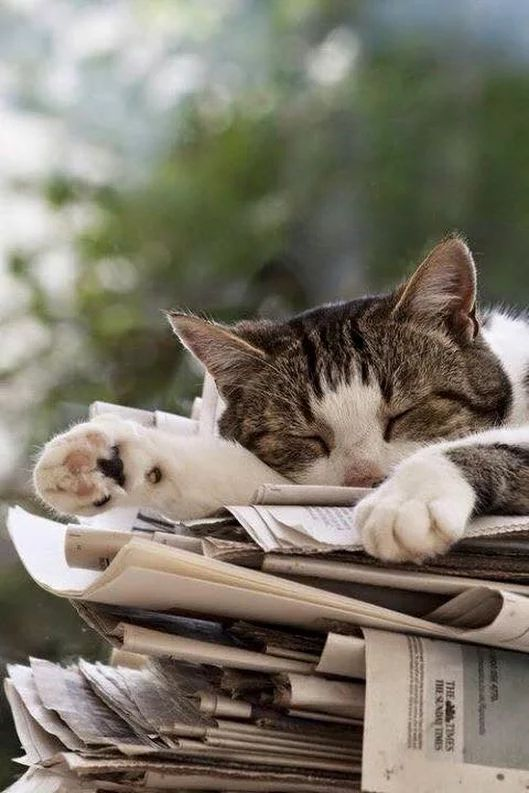 Sleeping places...you never know what they might choose. and like OMG! get some yourself some pawtastic adorable cat apparel!
