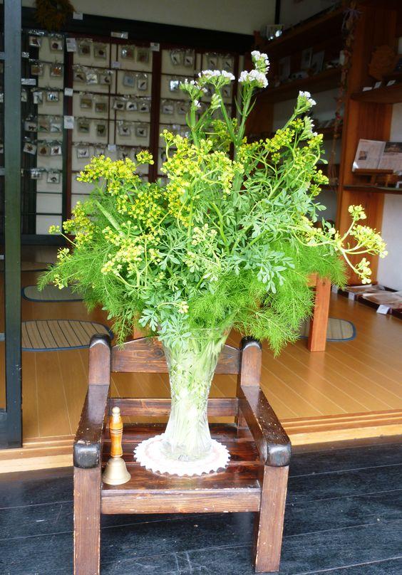 5月16日 農家喫茶の活花 ルー ミカン科 ヘンルーダ属 常緑小低木 和名 ヘンルーダ(オランダ語) 虫よけの効果があることで知られています。 ルーは、古代ローマ時代から魔よけのハーブとして信じられてきました。