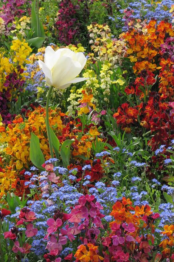 Wow! This photo is the ultimate goal for a healthy garden: lots of color and texture.: