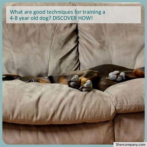 Dog Training Elite Utah Dog Training Questionnaire Dog Training