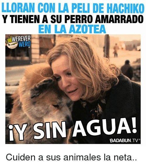 Pin De Gero Campos En Perro Sin Pelo Peruano Perro Sin Pelo Perros Animales