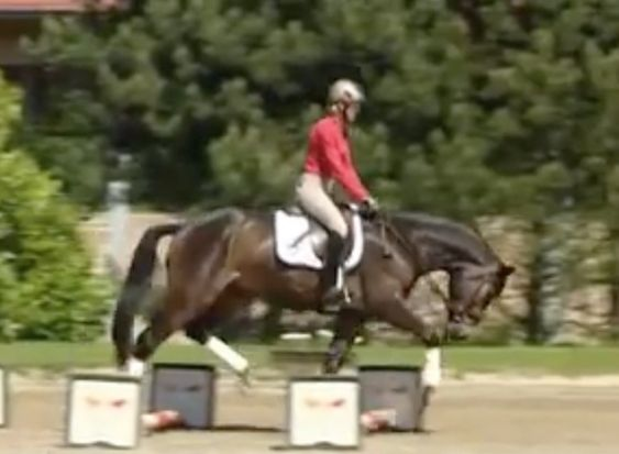 Ingrid Klimke (GER) is one of the world's top eventers and she also rides dressage at the highest levels. She is an advocate of using pole w...