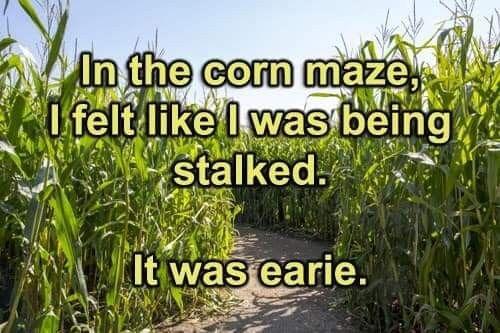 Pin By Judy Quinn On Funny Inspirational Humor Corny Jokes Corn Maze