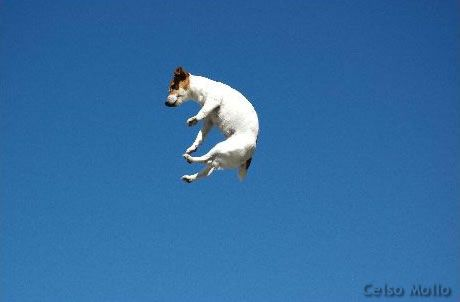 JRT learning how to fly! =)