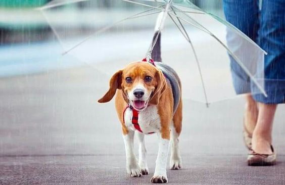 An umbrella for dogs 🐕☔