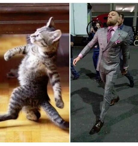 Walk like a cat sting like a bee.- Conor Mcgregor