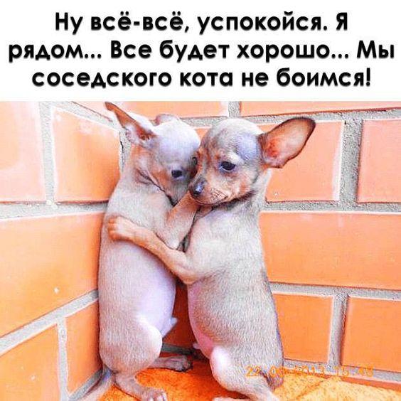 https://i.pinimg.com/564x/c7/77/7e/c7777ec8db0609f4b7310262c97aa6d1.jpg