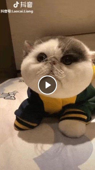 O Gato Alienígena