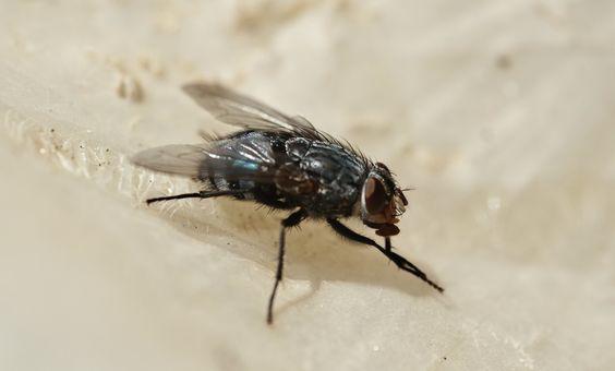 Haz tu propio papel mata moscas