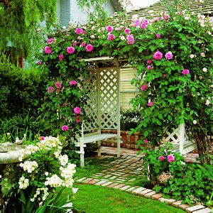 Rose-covered Arbor in 5hours $300
