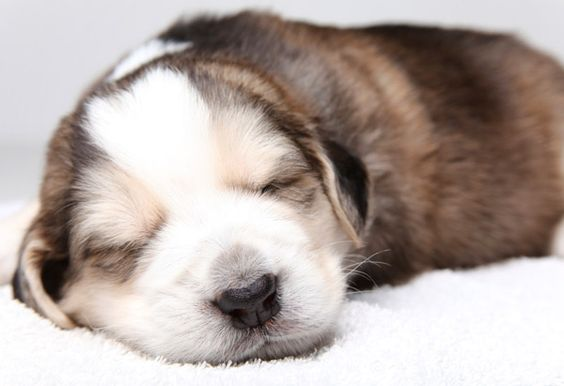 """""""The Nap Cure"""" by Amy Hertz for Oprah Magazine. Burned-out? Sleep deprived? Desperate for help? The author recommends throwing away your prescriptions and learning to nap. According to sleep expert Gregg Jacobs, Ph.D., author of """"Say Good Night to Insomnia, """"The benefits of napping are widely researched and scientifically validated. We hope the time will come when it's routine during the workday to take a 20-minute nap instead of a 20-minute coffee break."""""""