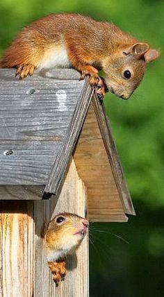 Ecureuils, de drôles d'oiseaux !