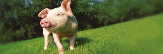 Warum sollten Tiere Rechte haben? Quelle: peta.de