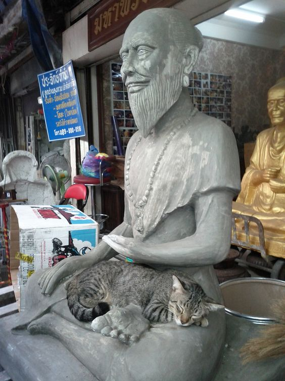 Buddha Cat - Amulet Shop - Bangkok, Thailand (by veryvalerie)