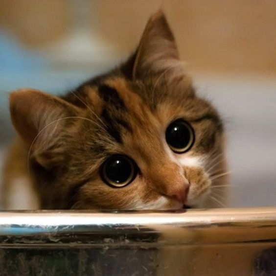 Now... take a peek at this adorable cat with pouty eyes. (She wants some of your love.):