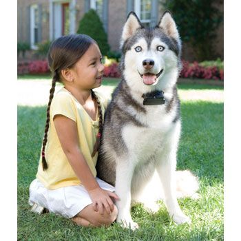 PetSave invisible fence $194