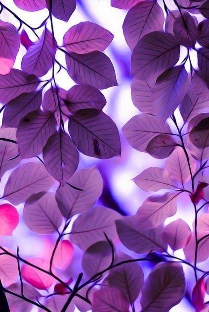 Paling Populer 26 Foto Wallpaper Untuk Wa Gambar Yang Bagus Untuk Wallpaper Wa Cantik Foto Yg Gudangwallpaper Di 2020 Latar Belakang Bunga Ungu Pemandangan Abstrak