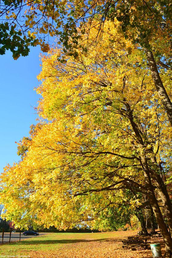 Autumn's peaking at Sarobia.