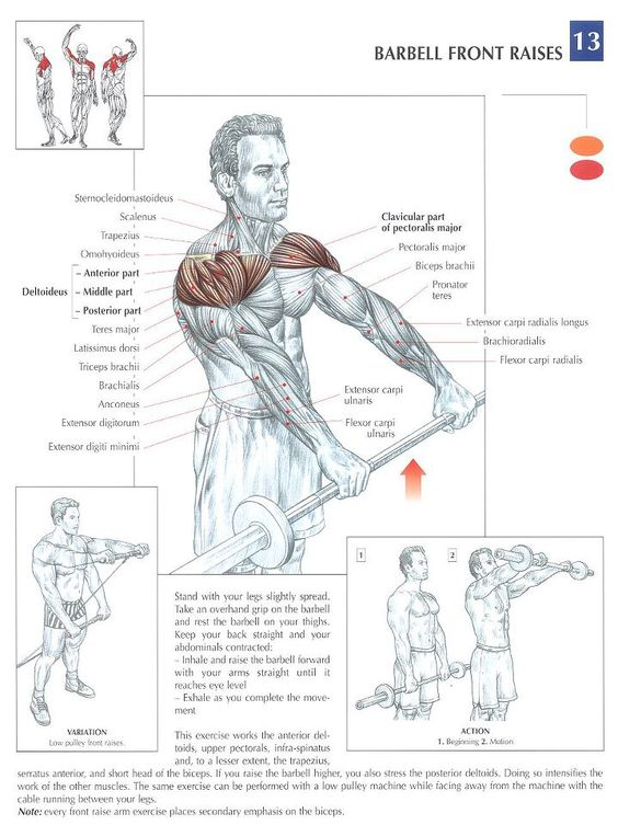 You can effectively develop your deltoids by incorporating body - physical assessment form