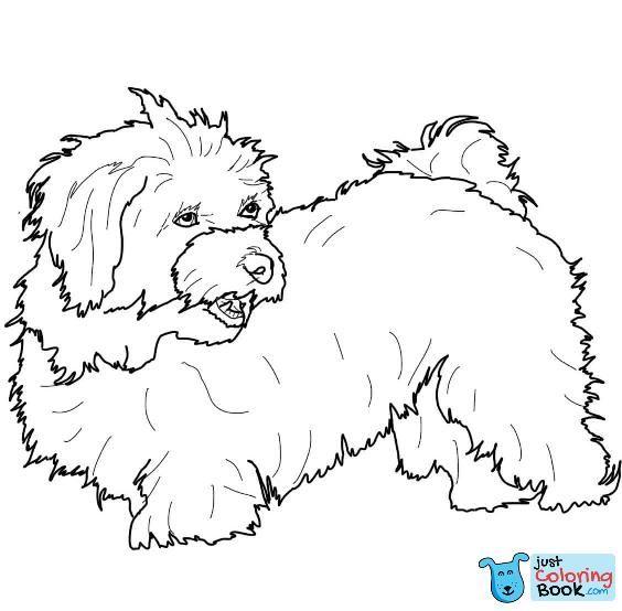 Havanese Super Coloring Dog Patterns Dog Coloring Page Inside
