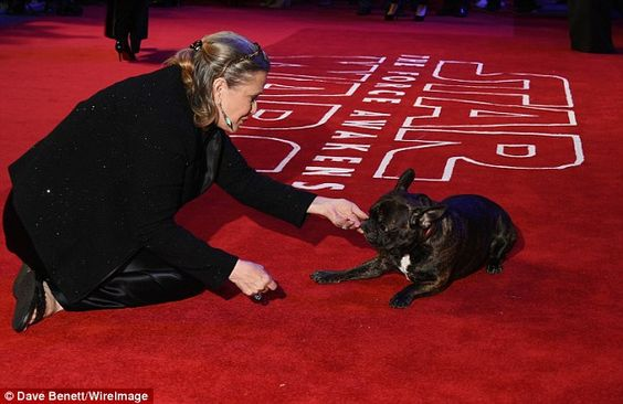 Gary the French bulldog has been hitting the promo trail for the new Star Wars film hard a...