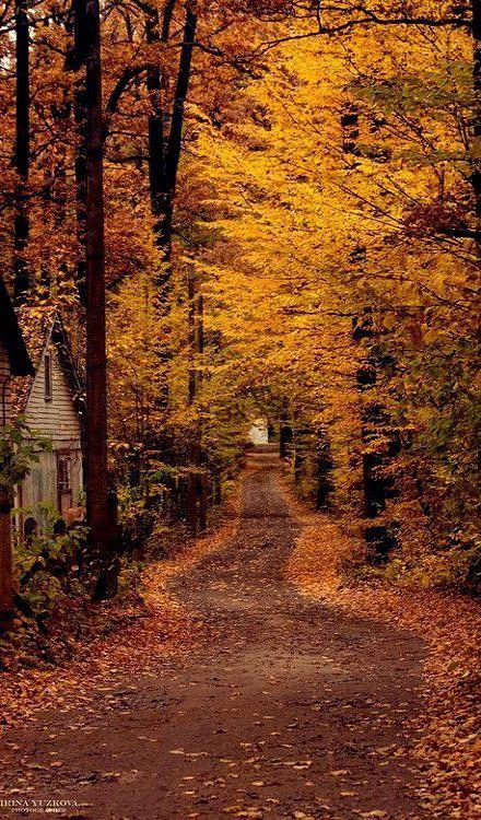 Autumn Path, Ukraine | by Irina Yuzkova: