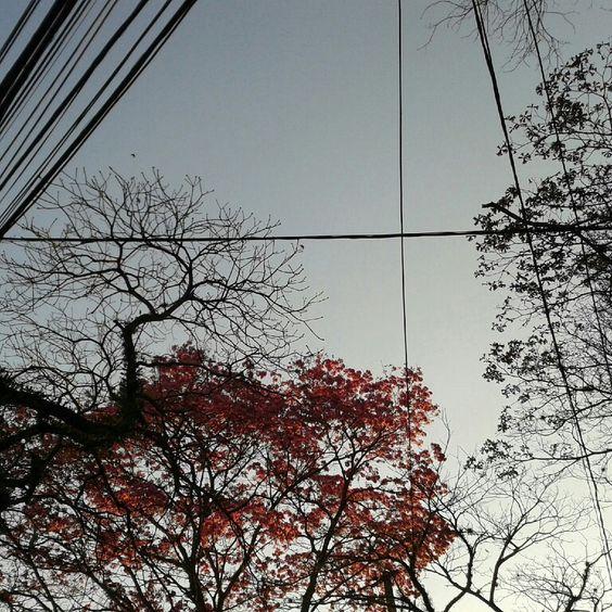 Curitiba.