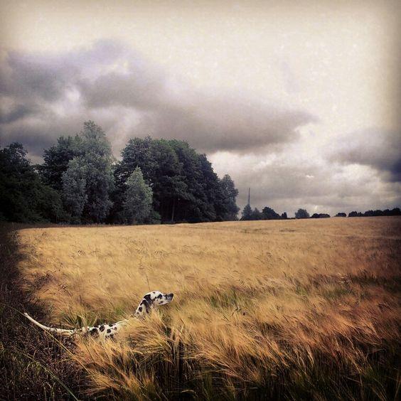 Summer 2013. Our beautiful field walks.