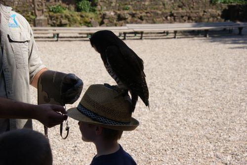 Birds of Pray in France near Monkey Mountain