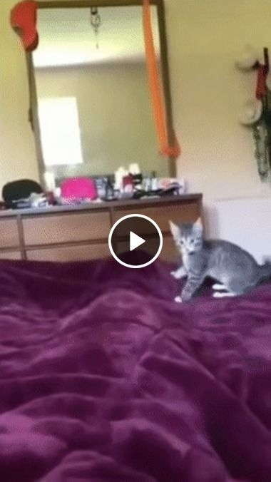 O gato está bravo e não quer conversa