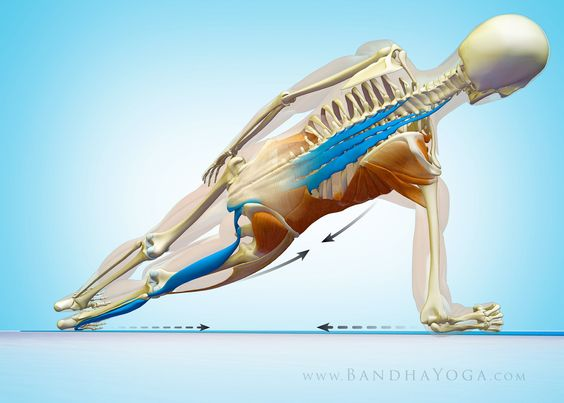 Yoga poses learn yoga and target on pinterest for Plank muscles worked diagram