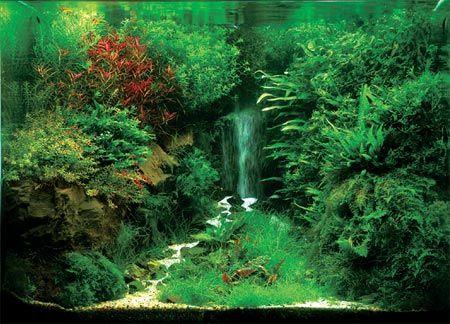 forest-fish-2.jpg