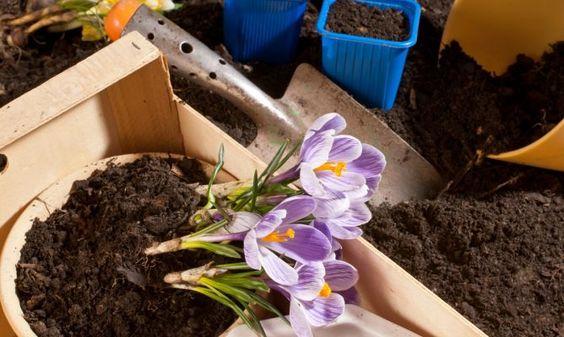 Esquemas de jardinería básica