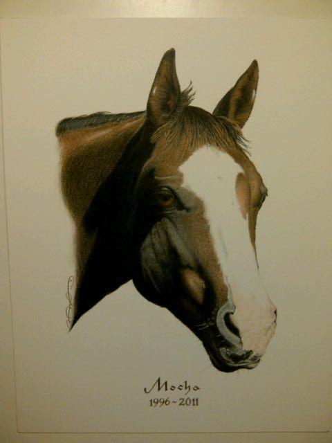 """Mocha"" Colour Pencil work. Horse Memorial ~ Drawn by: Michael P. McIntee"