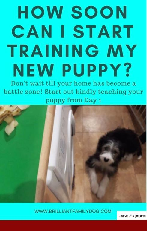How To Train Your Dog To Go The Bathroom In One Spot And Pics Of How To Train Your Dog To Ring A Bell To Go P Puppy Training Easiest Dogs