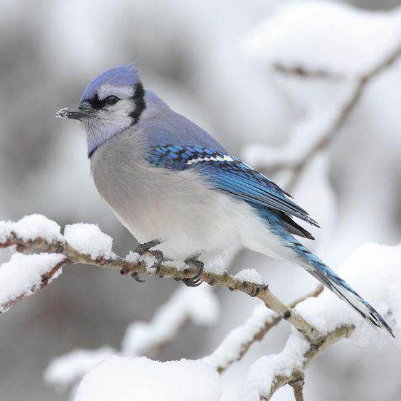 Blue bird wallpaper Blue bird wallpaper – ipadwallpapershop.com