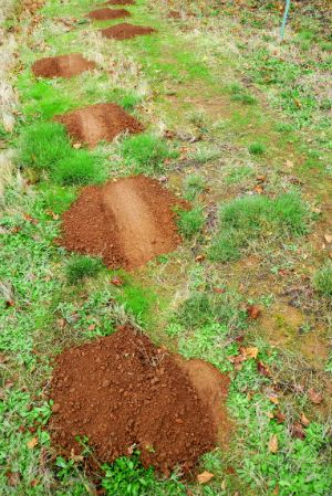 how to get rid of moles in your backyard
