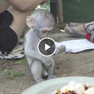 Macaco procurando o seu alimento
