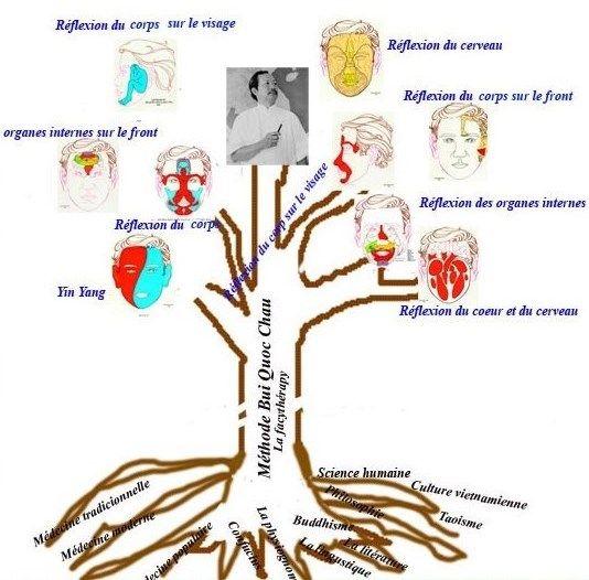 """Dien Chan (réflexologie faciale) : Drainage lymphatique ou """"massage six zones"""" + 12 massages du matin C7d3ef0d1f9ab4dfc3d15bbab2713332"""
