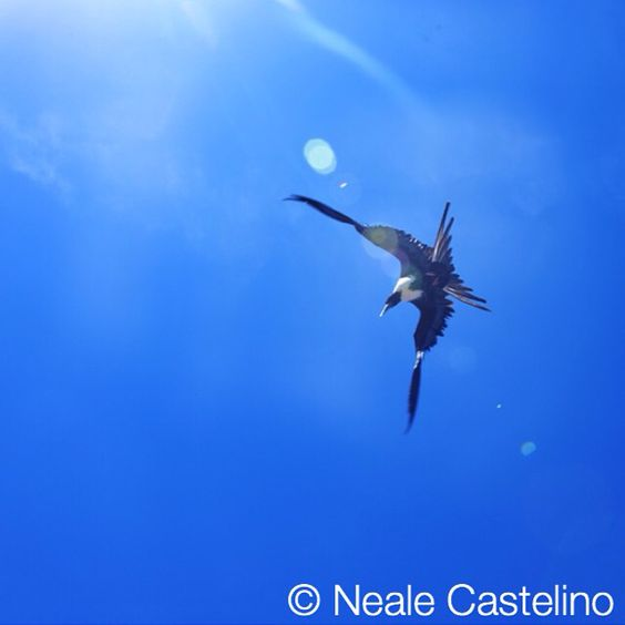 #nealecastelino #nealecastelinophotography #letscreateart #nikonphotography #nikon #lifestyle #color  #travelphotography #travel #lighting  #tyre #abstract #street #pattern #design #rgb #color_rgb #nature #blue #seagull #sky #reflection